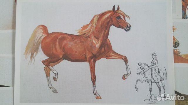 Лошадь наш друг открытки 17