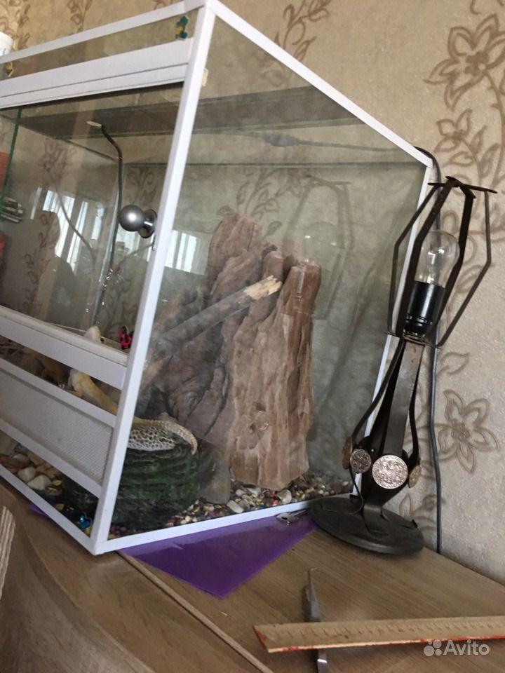 Террариум в Иваново - фотография № 2