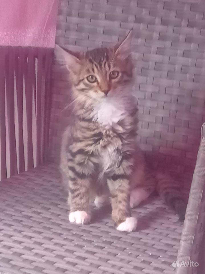 Отдаю котят в дар в Чехове - фотография № 7