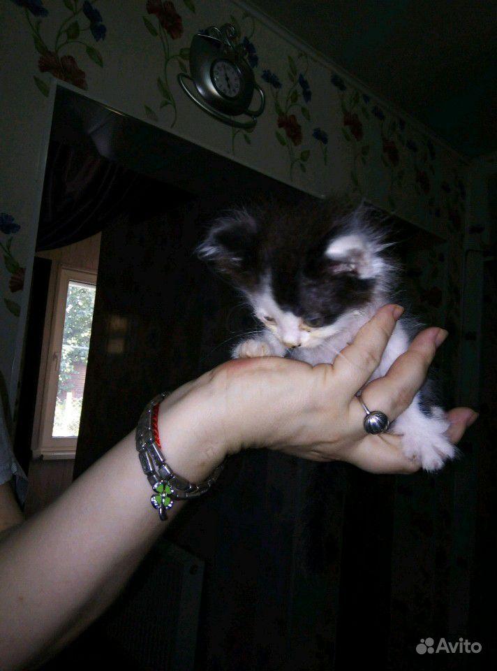 Бело-чёрный котенок