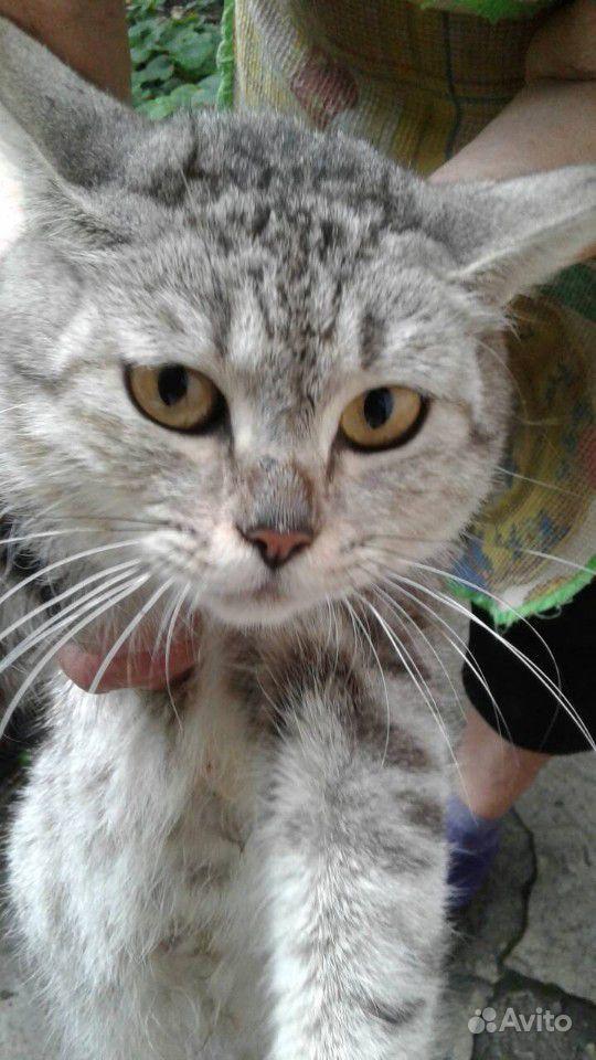 Шесть 4-х недельный котят (на фото мама)