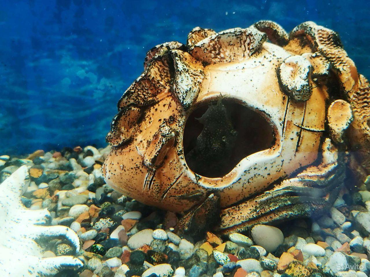 Украшение для аквариума купить на Зозу.ру - фотография № 7