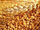Пшеница,ячмень,овес