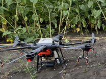 Обработка полей дронами, десикация