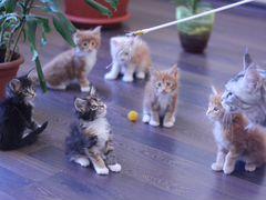 Скачать отдам породистых котят в хорошие руки авито