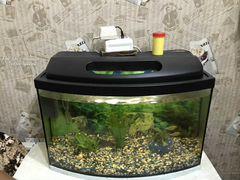 Аквариум 50 л с рыбками