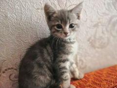 Отдам котёнка в добрые руки, девочка
