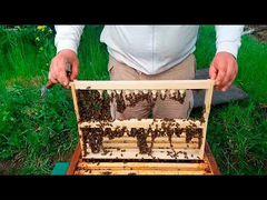Плодные матки.пчелы.маточники