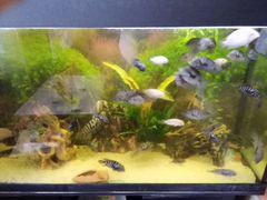 Рыбки продаются полосатики