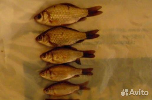 авито великий новгород рыбалка