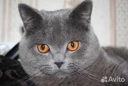 Авито астрахань коты