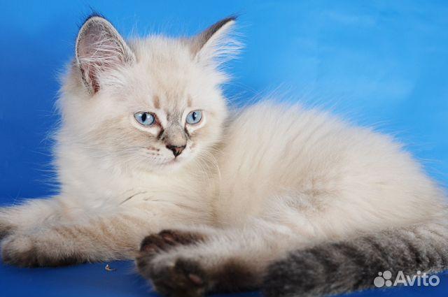 Фото котят и кошек   Кот, кошка и котята