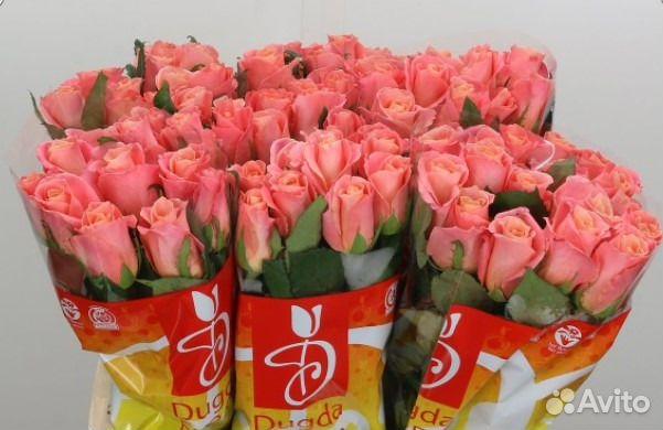 Купить розы оптом краснодарские заказ цветов с доставкой лилии
