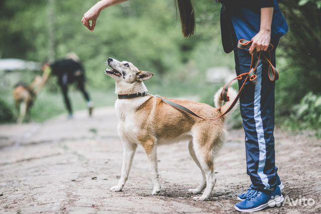 Джерри - идеальная собака в добрые руки купить на Зозу.ру - фотография № 4