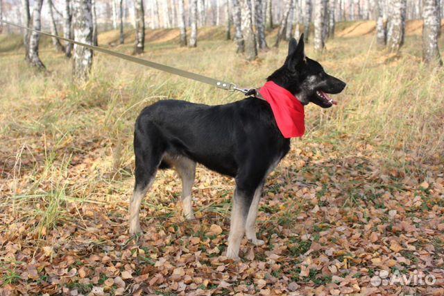 Собака Макс в дар купить на Зозу.ру - фотография № 2