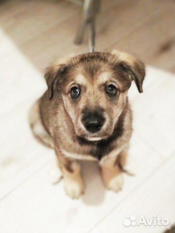 Грустный щенок никак не найдет дом купить на Зозу.ру - фотография № 1