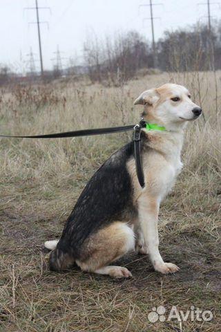 Собака щенок Эви в добрые руки бесплатно купить на Зозу.ру - фотография № 7