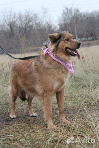 Собака из приюта в дар купить на Зозу.ру - фотография № 2