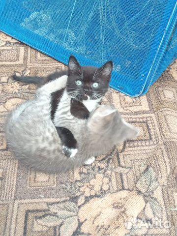 Кошка 89606708188 купить 2