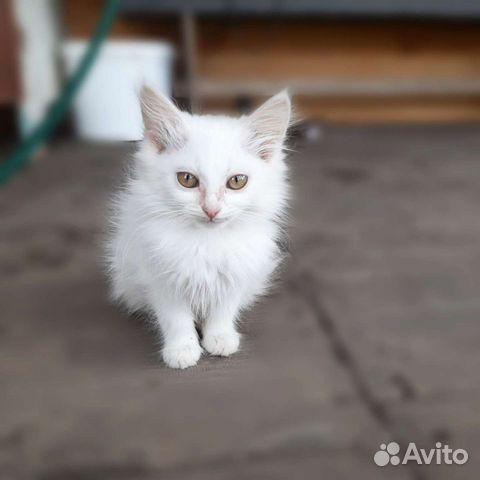 Katt  89196085946 köp 2