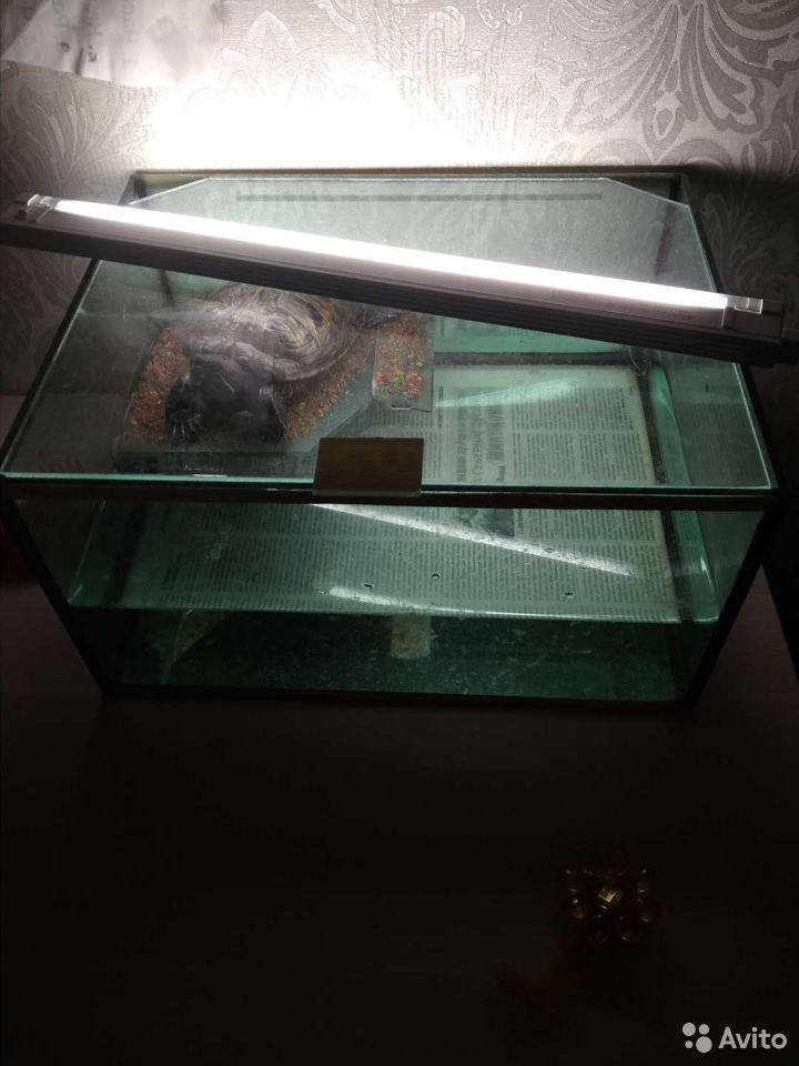 Черепаха  89513220132 купить 2