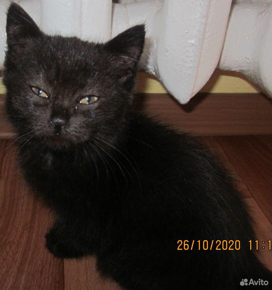 Котенок-девочка  89879370220 купить 3