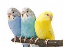 Птицы в ассортименте