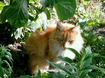 Котейка ищет дом