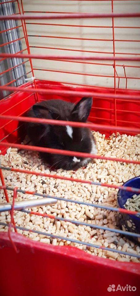 Дикоративный кролик +большая клетка
