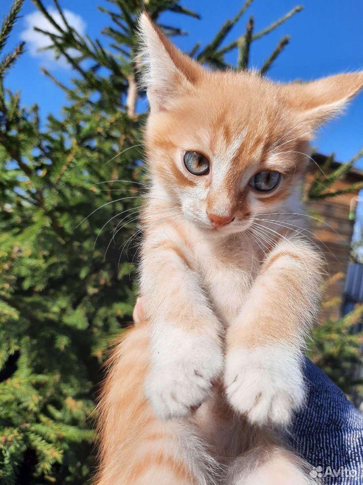 Кошка  89136331684 купить 1