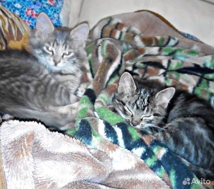 Котятки окажутся на улице, если не найдут дом  89510840775 купить 1