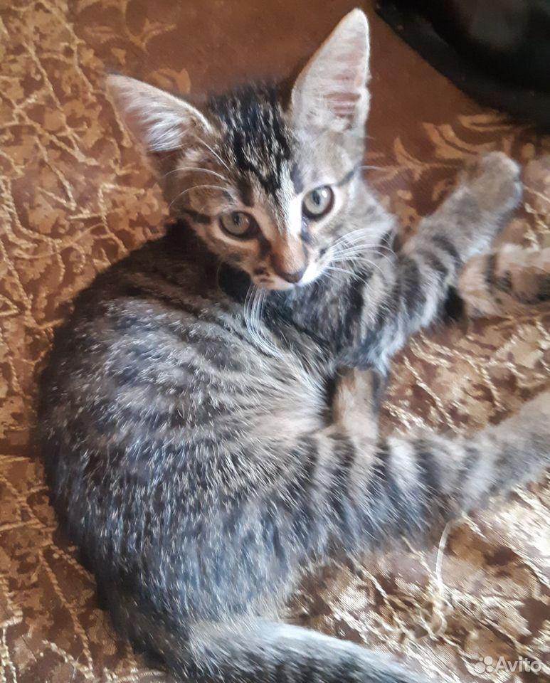 Котята две сестры и братик  89107128313 купить 5