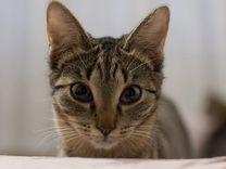 Кошечка (Котенок) в добрые руки