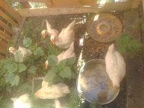 Меняю гусят цыплят