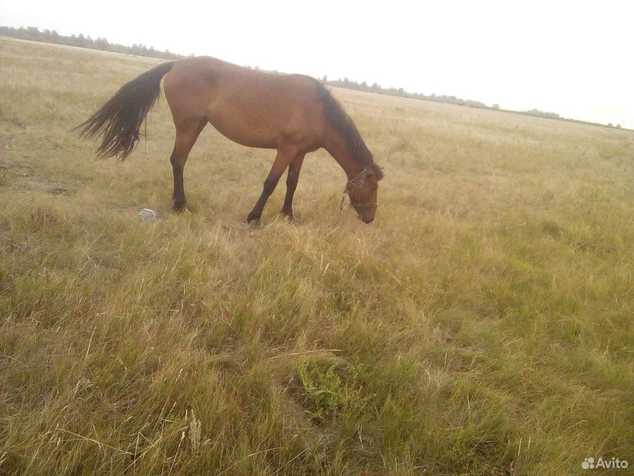Лошадь жеребушка  89502100369 купить 1